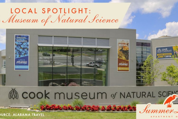 Local Spotlight: Cook Museum of Natural Science