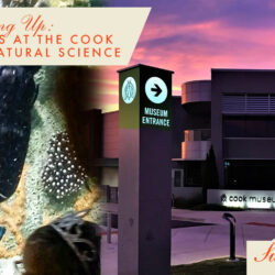 Fall Fun Days at the Cook Museum of Natural Science