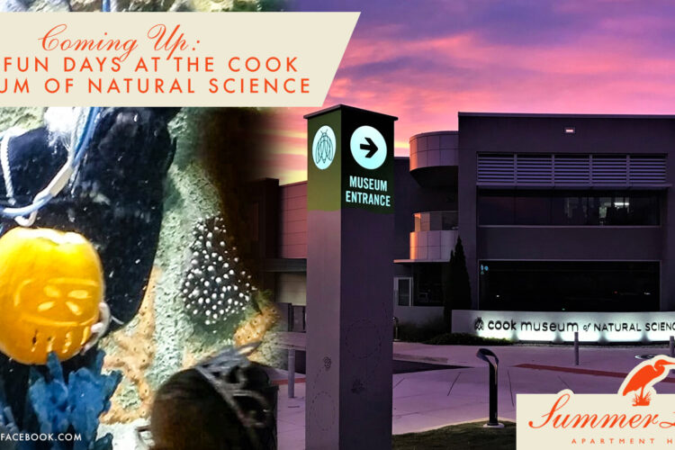 Coming Up: Fall Fun Days at the Cook Museum of Natural Science